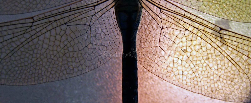 3 przejrzystego skrzydła obraz stock