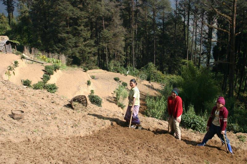 3 rolników himalajskich gór kobiety fotografia stock