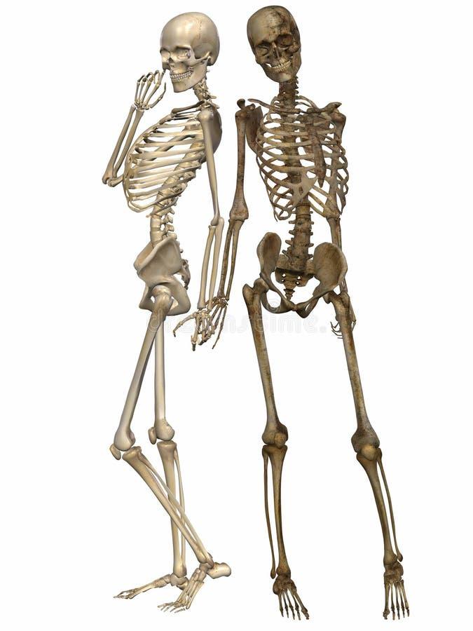 3 scheletri di D - amici per mai illustrazione di stock