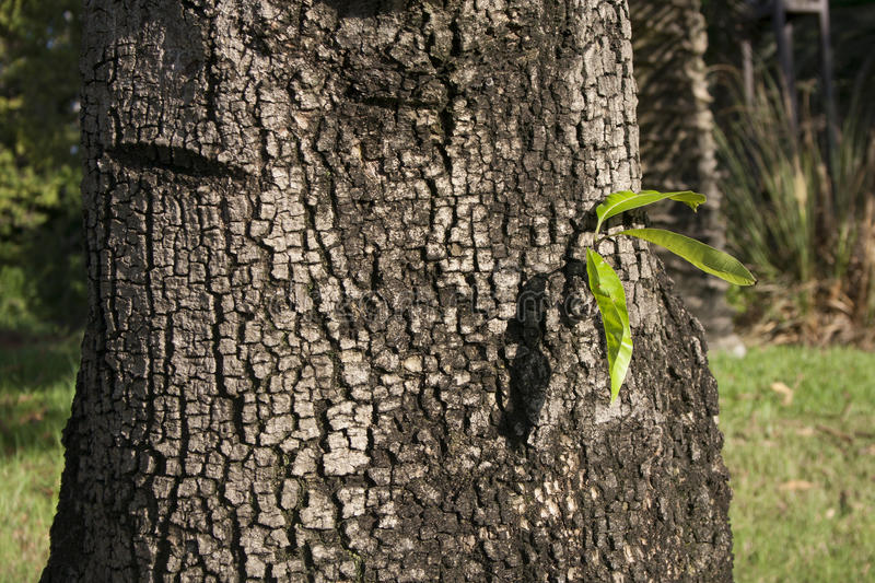 Download 3 Sheets On A Wide The Tree Trunk Stock Photo - Image: 26655158