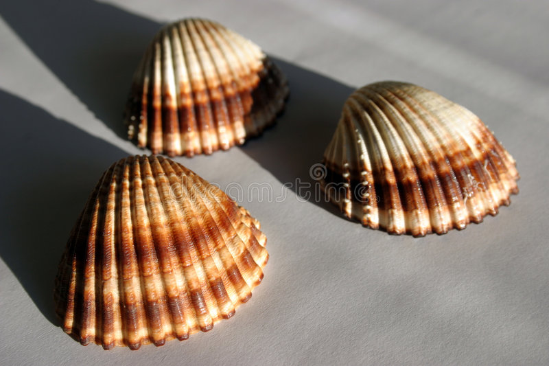 3 Shells Royalty-vrije Stock Foto's