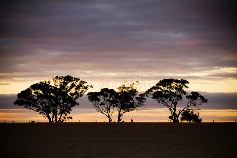3 Silhouetted trees. As the sun sinks below the horizon in the country royalty free stock photography