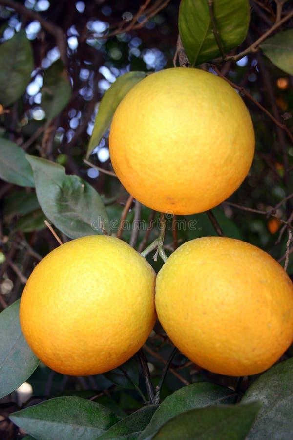 3 sinaasappelen stock foto's