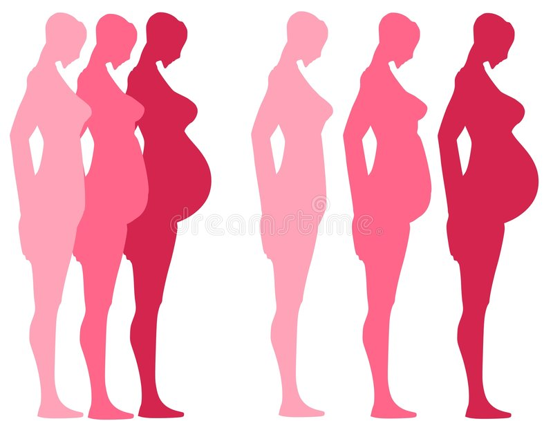 3 Trimesters of Pregnancy stock illustration