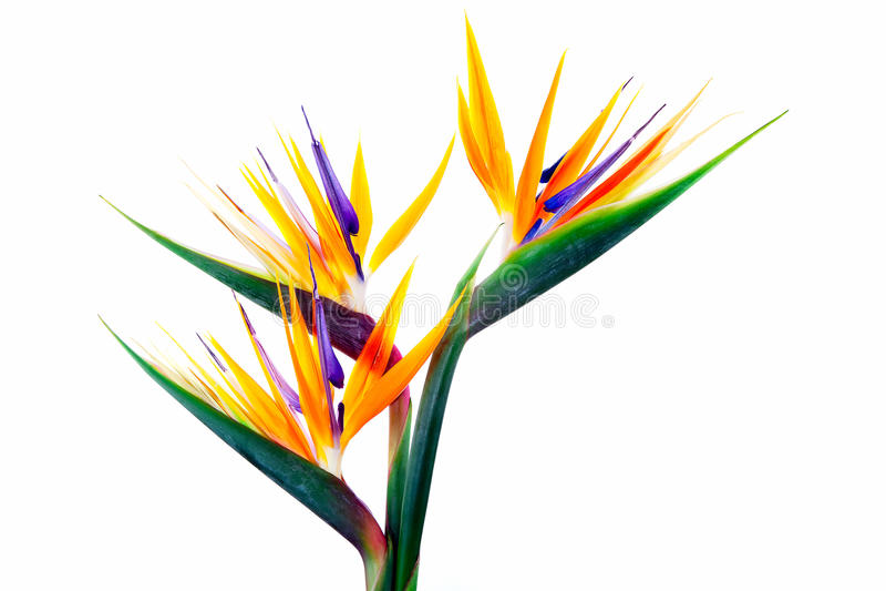 3 tropiska blom royaltyfri fotografi