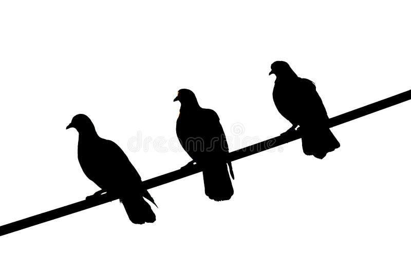 3 uccelli neri fotografie stock