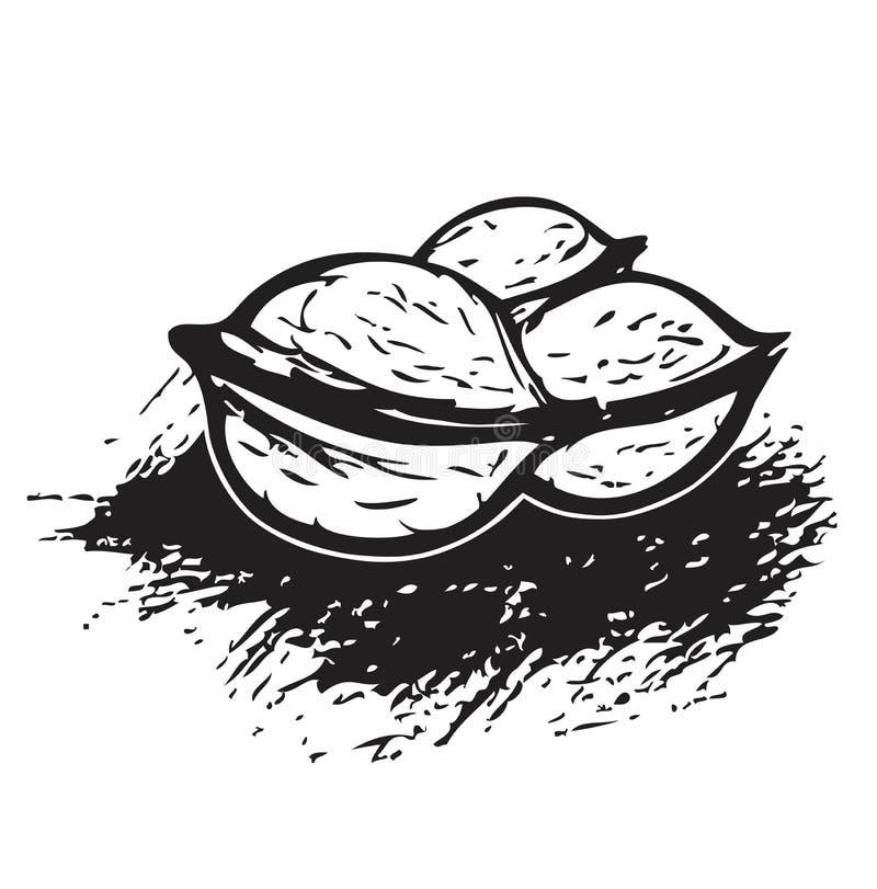 3 Walnüsse in Schwarzweiss - Abbildung stock abbildung
