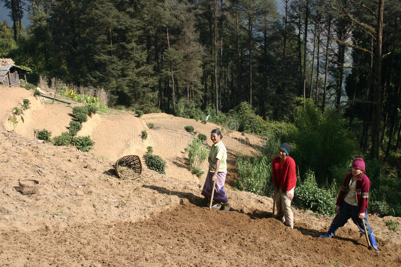 Download 3 Women Farmers, Himalayan Mountains Editorial Photography - Image: 11165712