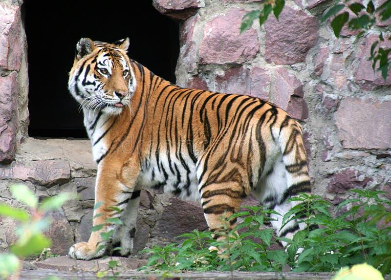 30莫斯科动物园 免版税库存照片