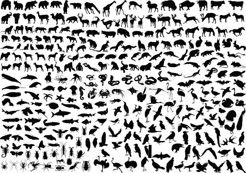 300 silhouettes animales illustration stock