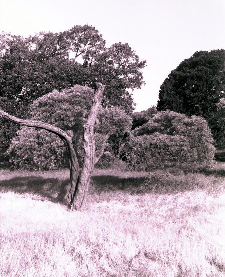 百年公园悉尼 图库摄影