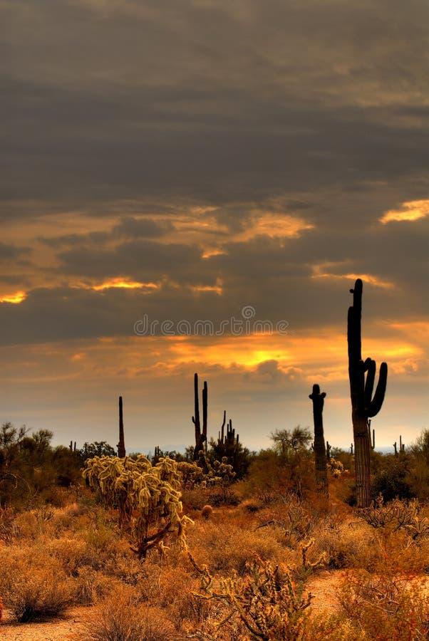 31 pustynna burza obrazy royalty free
