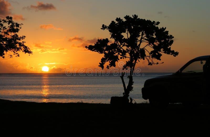 31 tropikalna serii obrazy royalty free