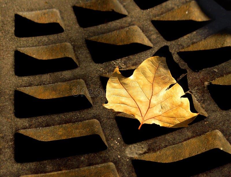 秋天生锈了 库存图片