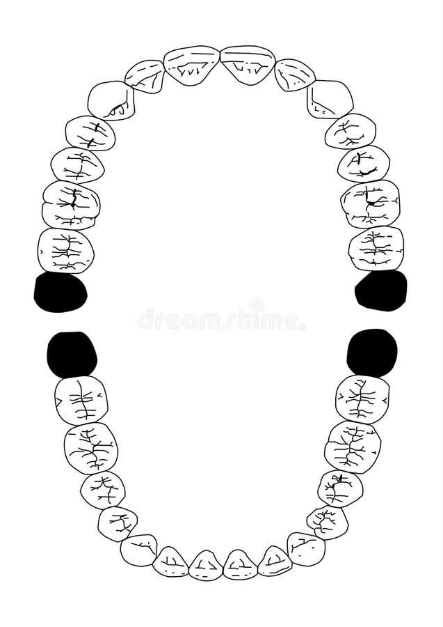 32 зуба бесплатная иллюстрация