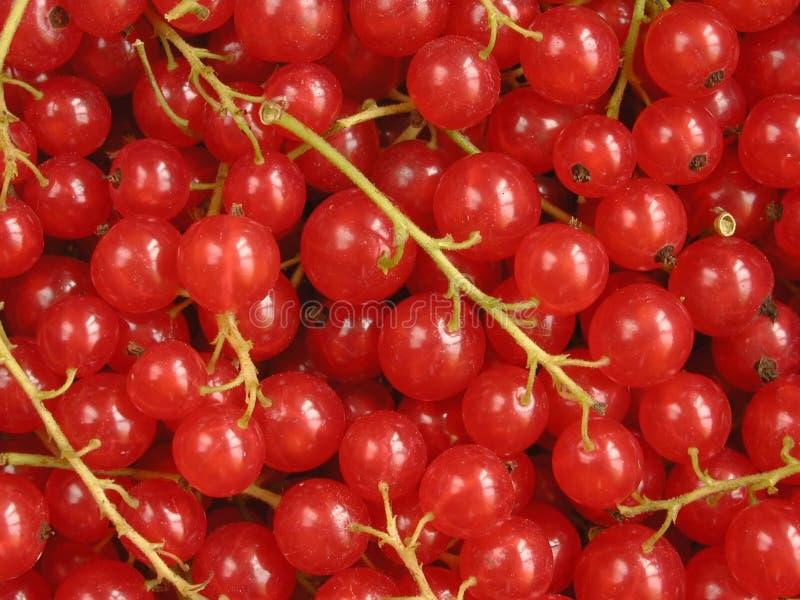 红色的无核小葡萄干 免版税图库摄影