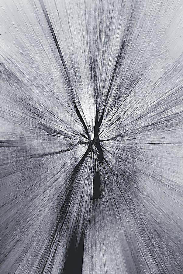 结构树漩涡 免版税库存照片