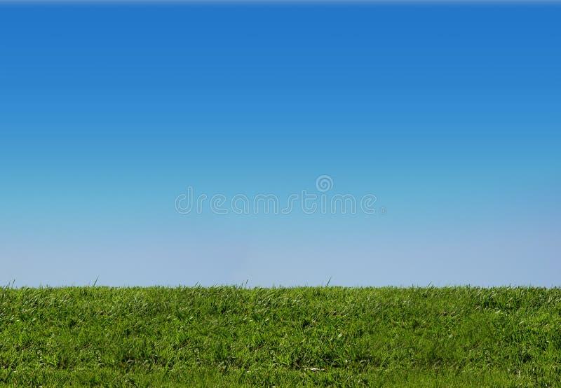 背景草天空 库存图片