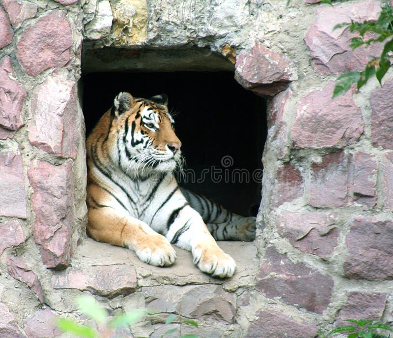 33 Moscow zoo zdjęcia royalty free
