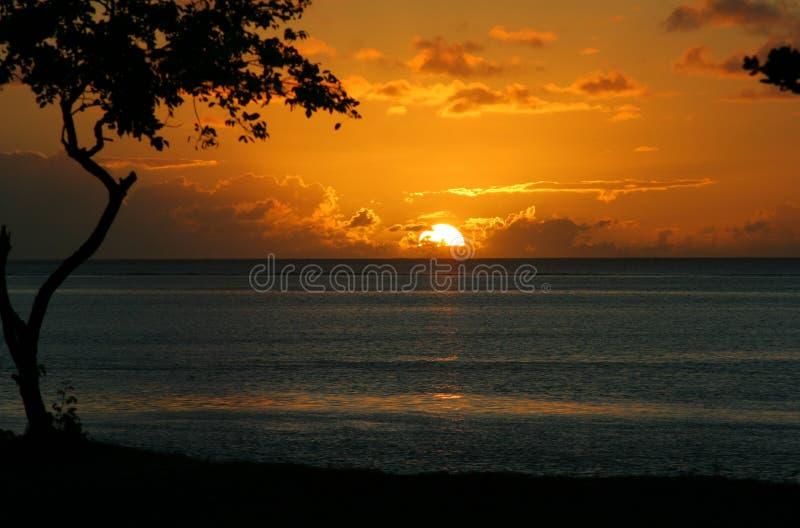 33 seies тропического стоковое фото