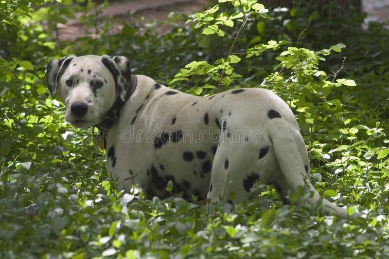 被察觉的狗 库存照片