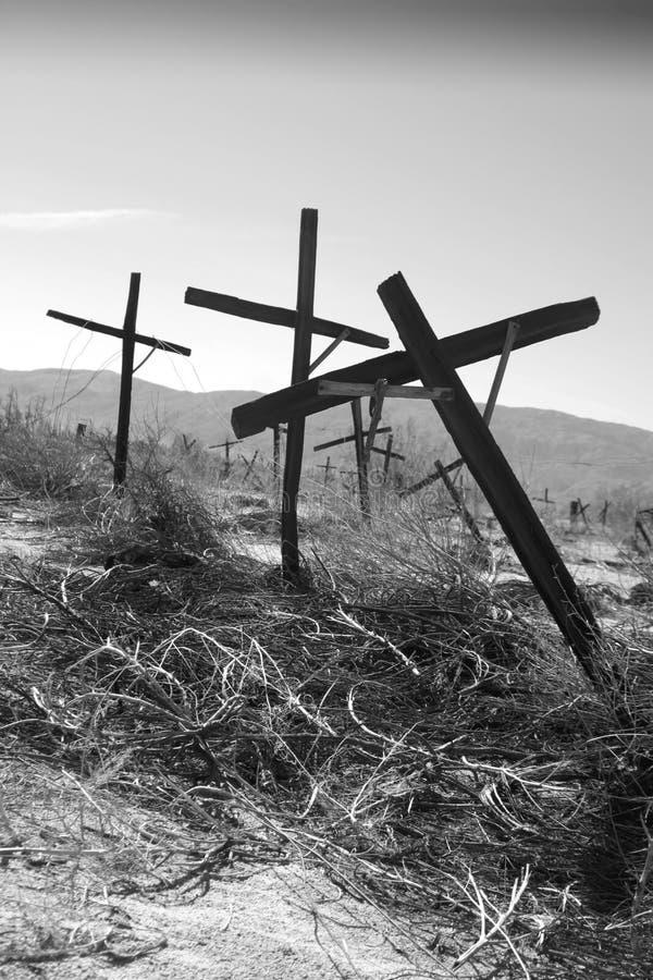 被放弃的葡萄园 免版税图库摄影