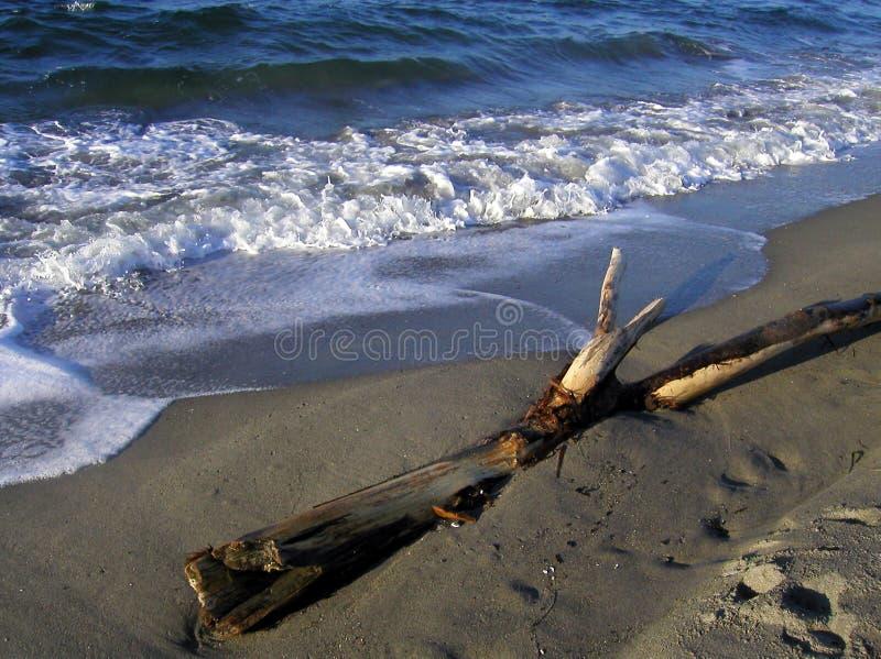 西北的海滩 库存照片