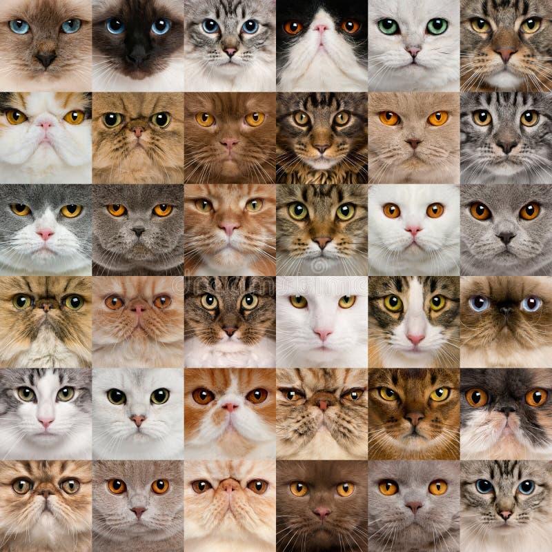 36 têtes de chat photographie stock