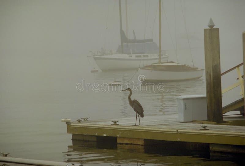 雾苍鹭 免版税图库摄影