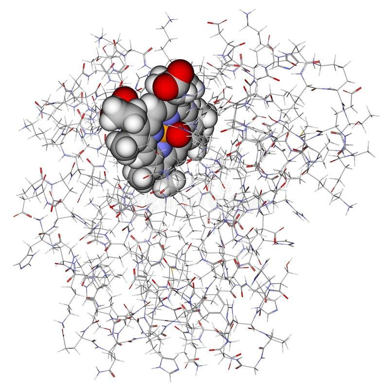 3d模型肌球素蛋白质 库存例证