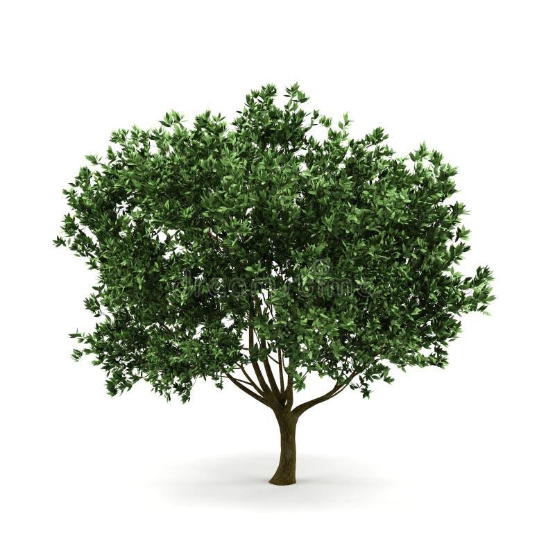 3d结构树 库存例证