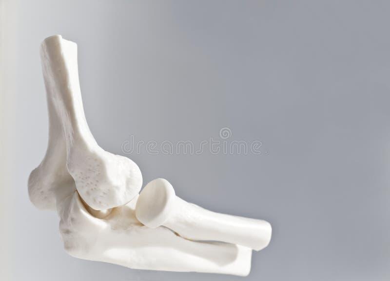 3D肘关节/骨头 免版税库存图片