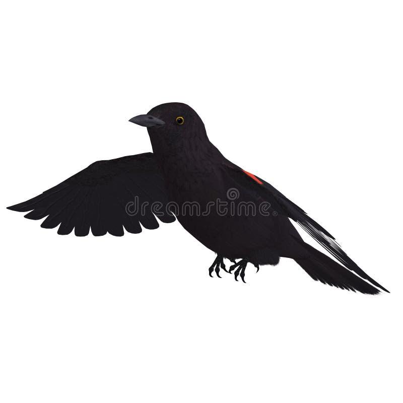 3d黑鹂男性红色翻译飞过了 皇族释放例证