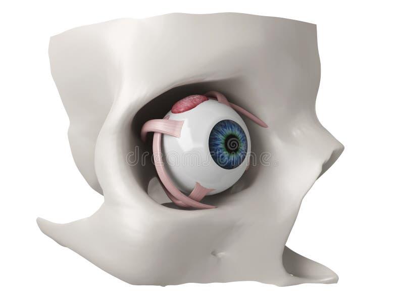 3d anatomii oka model ilustracji