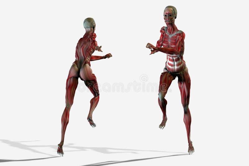 3D body anatomy royalty free illustration