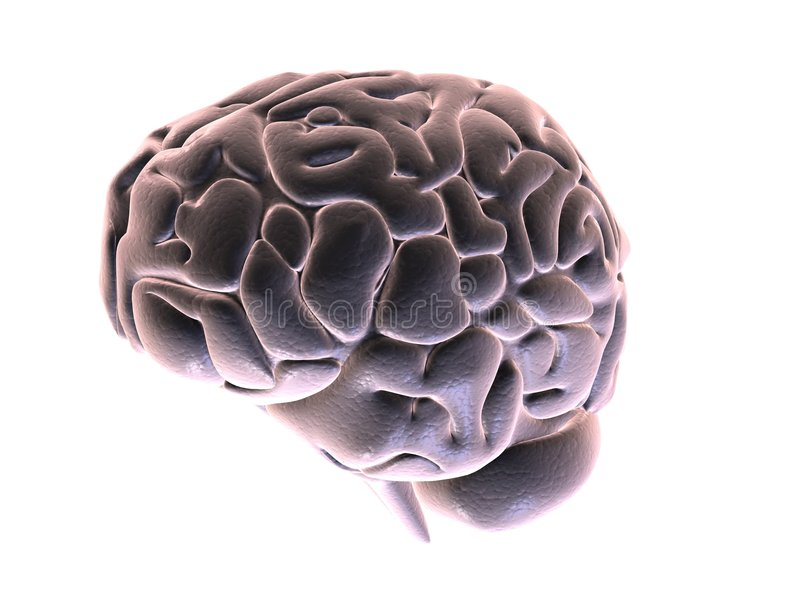 3d brain stock images