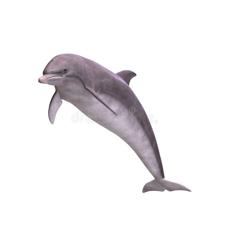 3d delfin royalty ilustracja