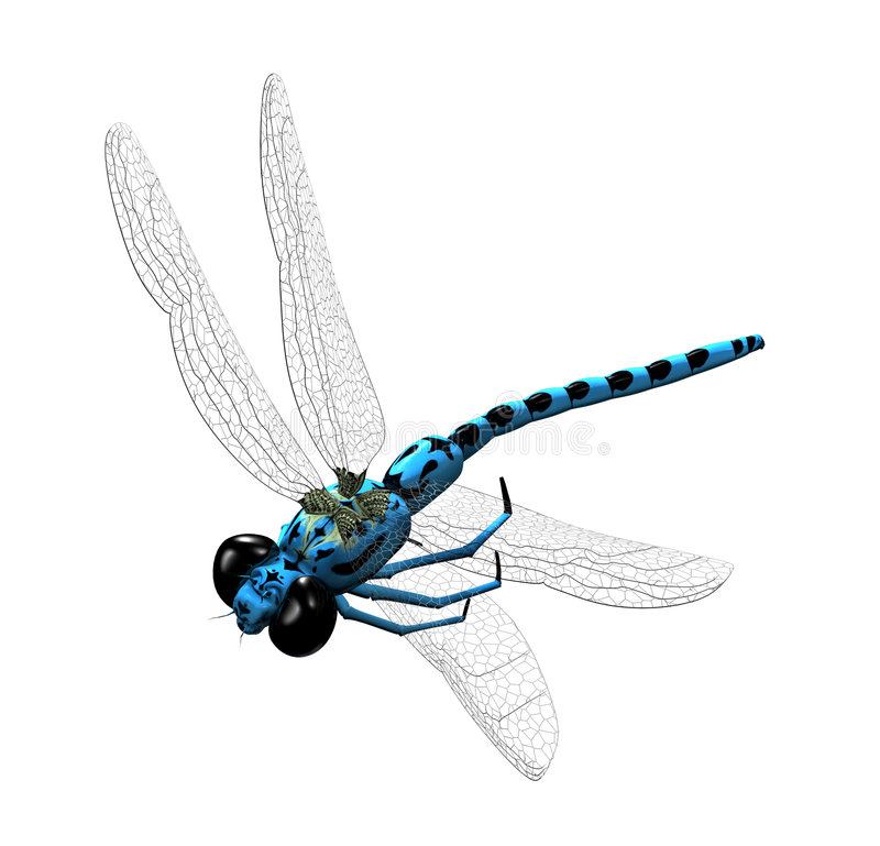 Free 3D Dragonfly Royalty Free Stock Photos - 3490288