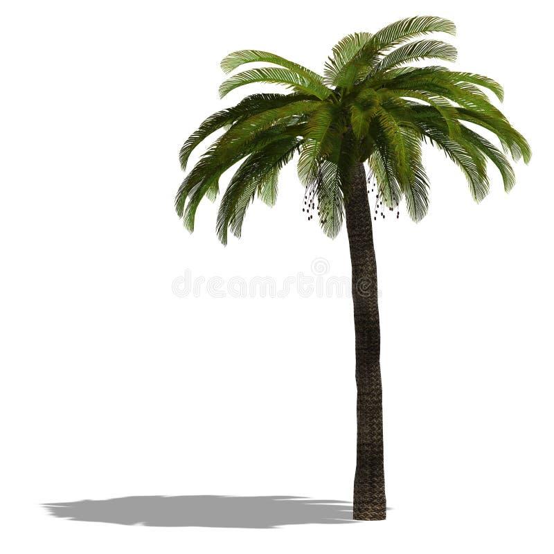 3D geef van een palm terug royalty-vrije illustratie