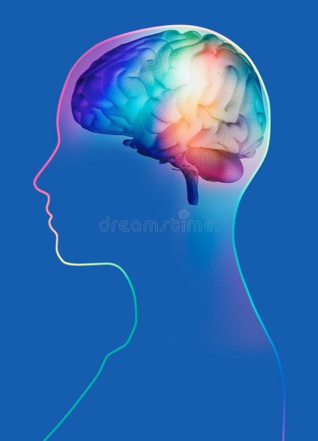3d geef van hersenen in womanshoofd terug vector illustratie