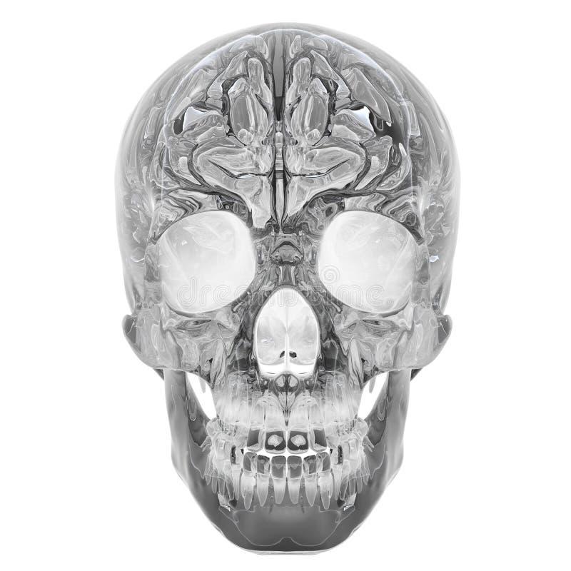 3D Glass Crystal Skull royalty free illustration