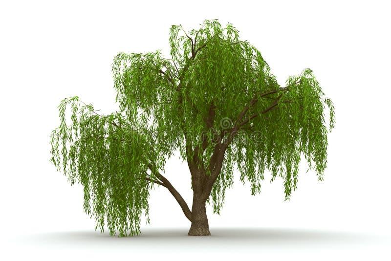 3d groene boom het huilen wilg isoleert stock illustratie