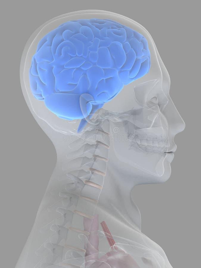 3d hersenen stock illustratie