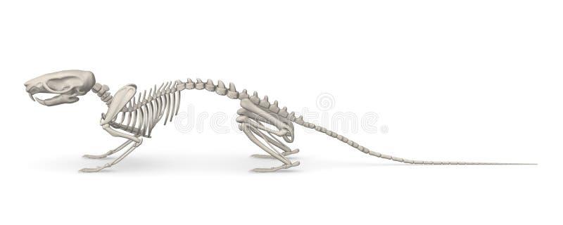 3d het skelet van de muis stock illustratie