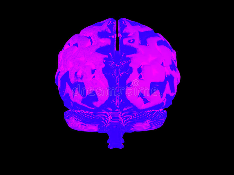 Download 3d human brain stock illustration. Image of knowledge - 26927104