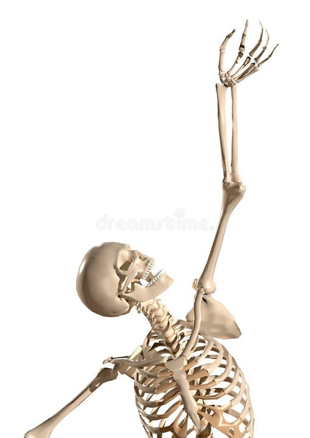 Free 3d Human Skeleton Reaching Through Hands Royalty Free Stock Photos - 128357198