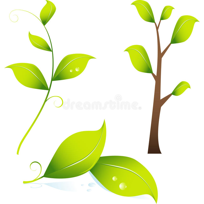 3D Image of Branch / Leaves. Set of 3D images of a tree and green leaves