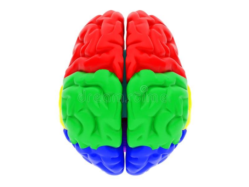 3d ludzki mózg royalty ilustracja