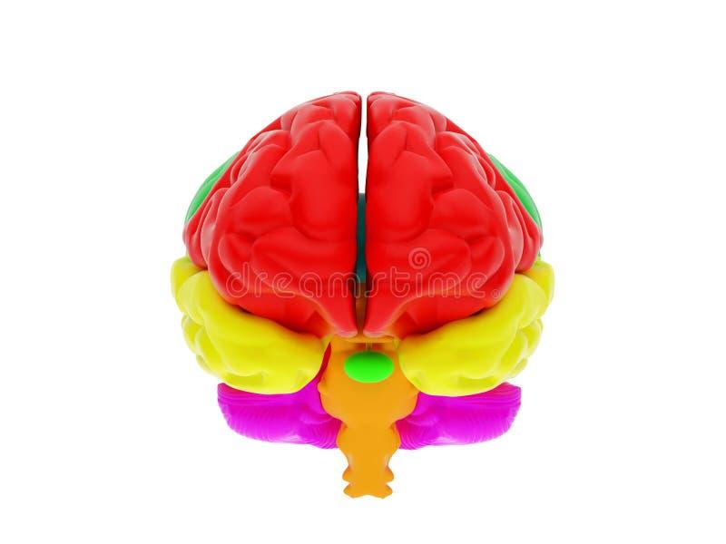 3d ludzki mózg ilustracji