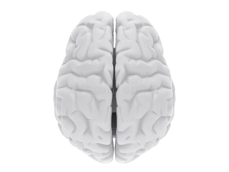 3d ludzki mózg ilustracja wektor